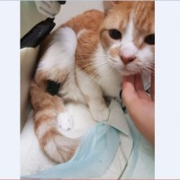 "An Orange Cat Named ""Blue"" Needs our Help. He is suffering from kidney failure"