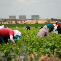 En EE.UU. redadas contra inmigrantes generan grandes pérdidas en industria